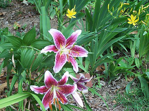 Garden blogging1