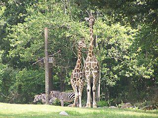 Zoo 027