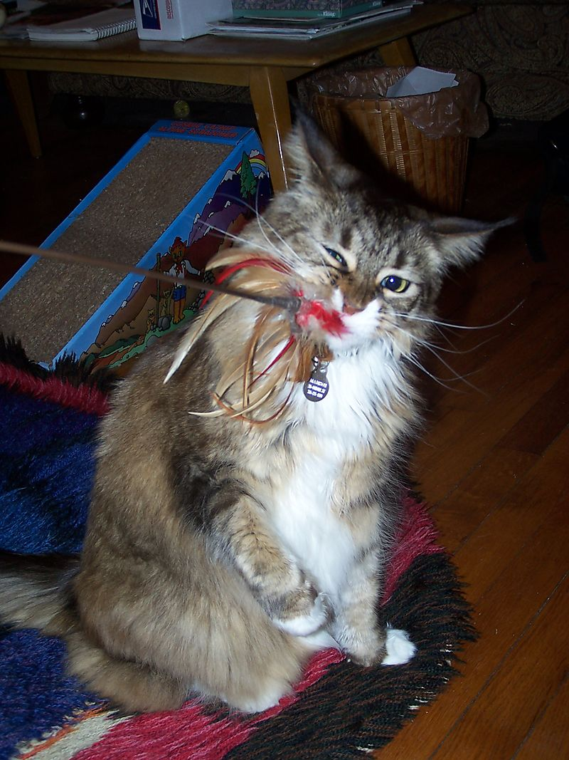 Maddie chewing feathers