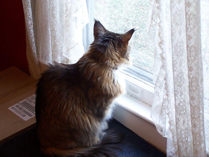 Windowcat1