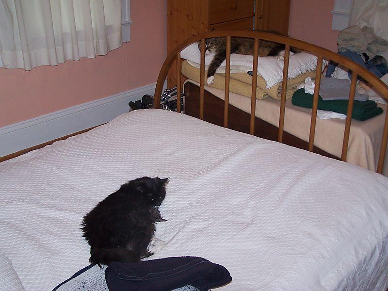 Kittenwar1