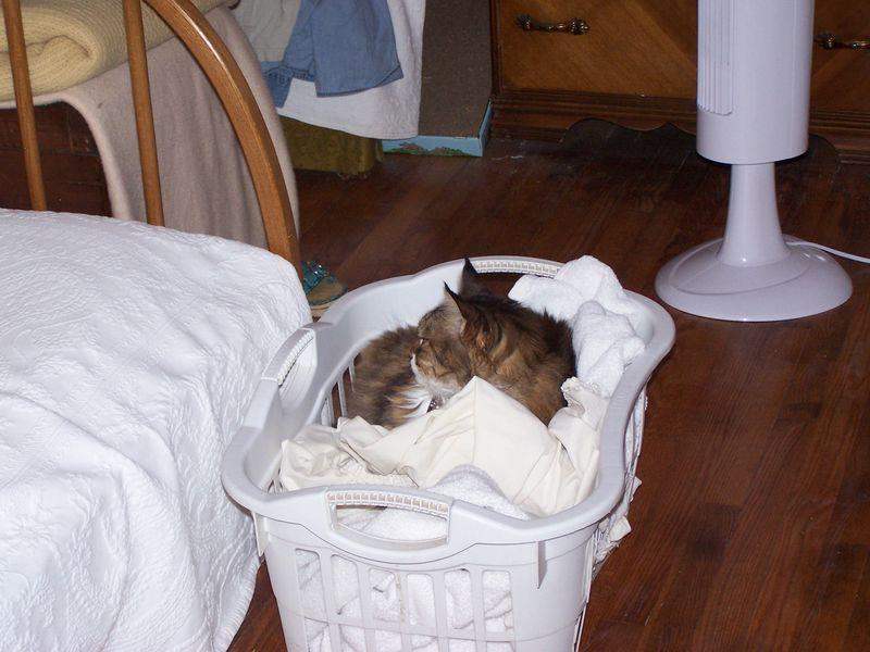 Warm Laundry!