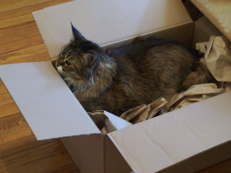 Maddie in box1