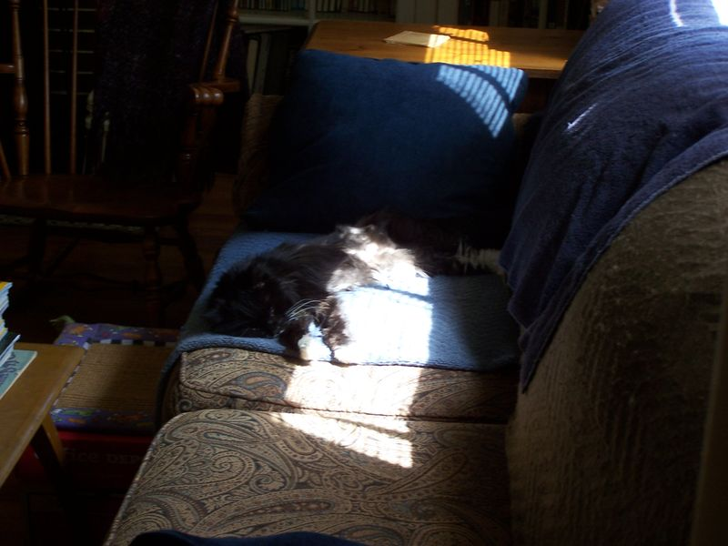 Napping in the sun2