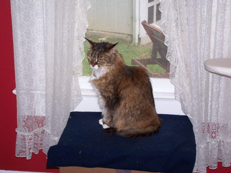 Windowbox2