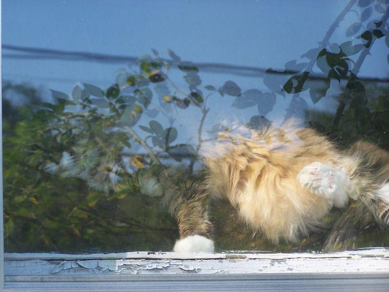 Maddie in window