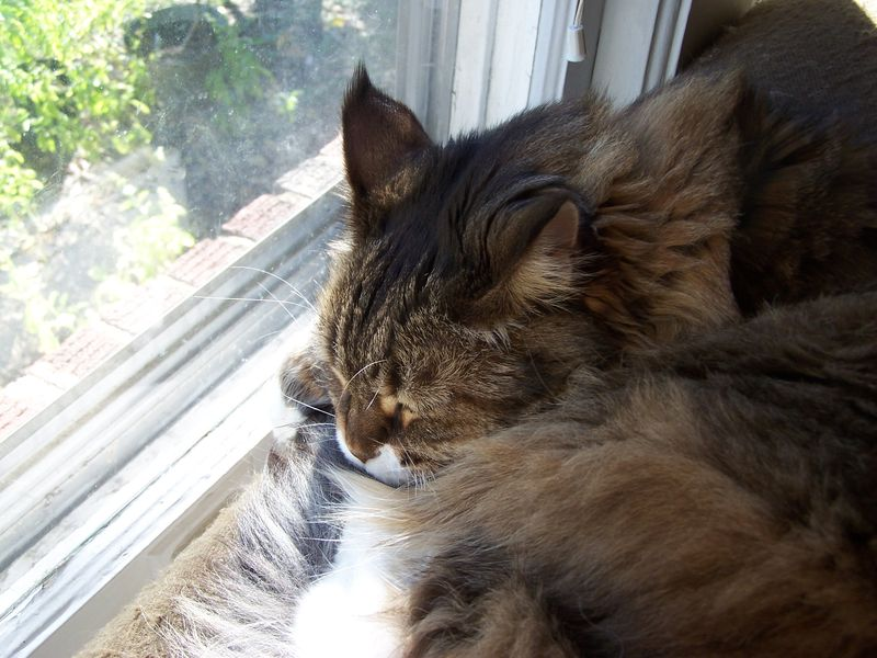 Window nap1