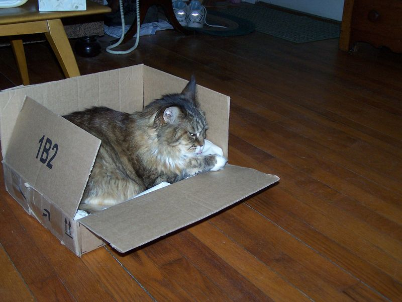 Relaxing in box