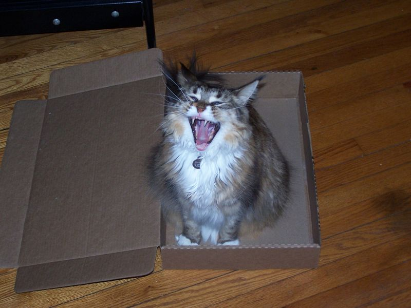Boxseries yawn
