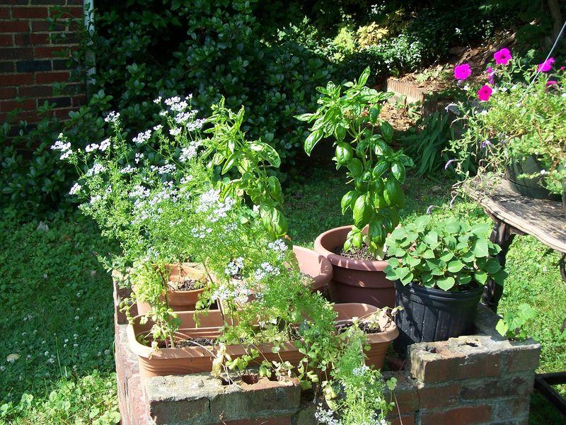 June garden9