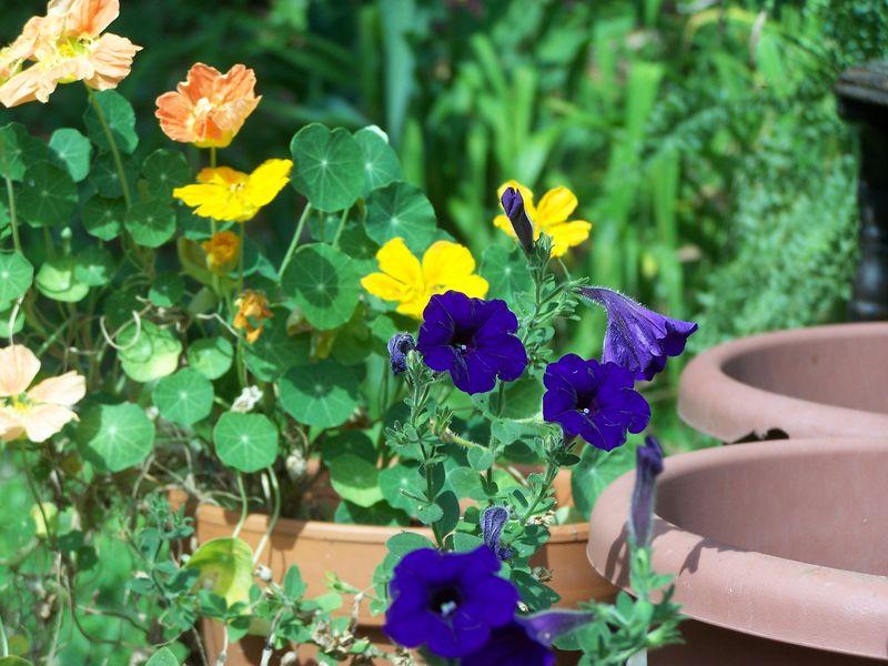 June garden1