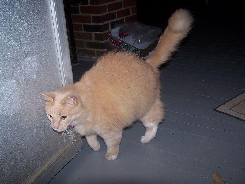 Kittykitty1
