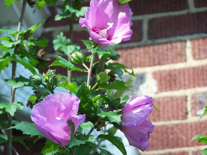 June garden5