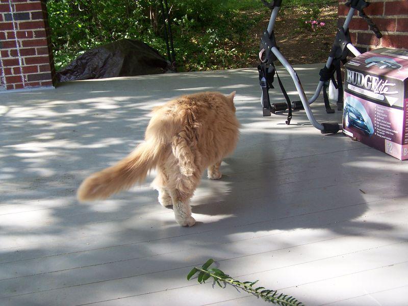 Kittykitty6
