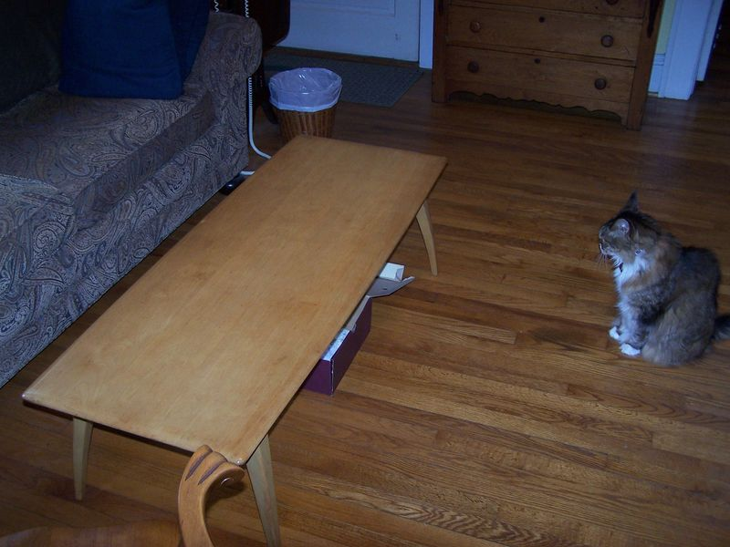 Table and cat 2