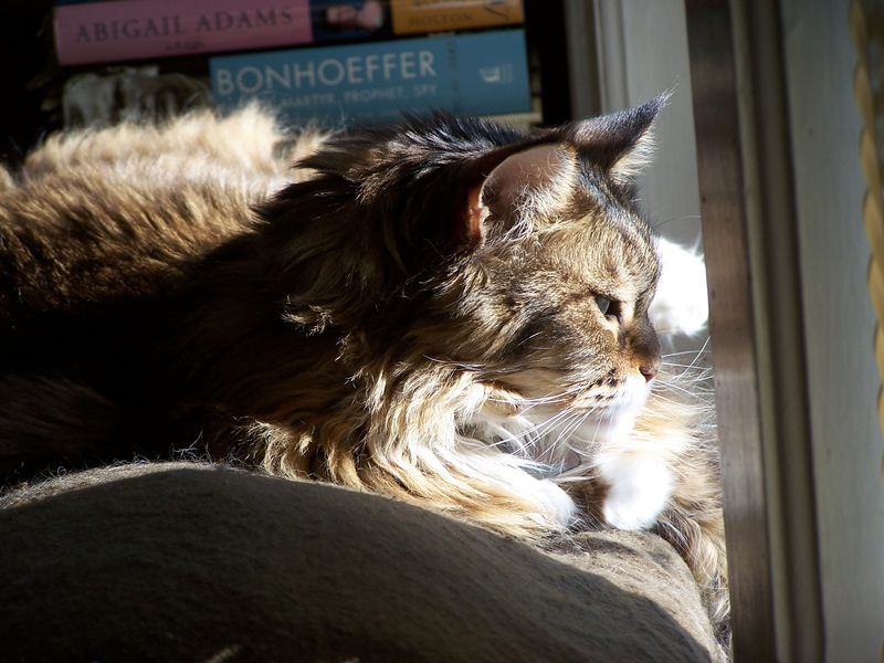 Senior kitty2