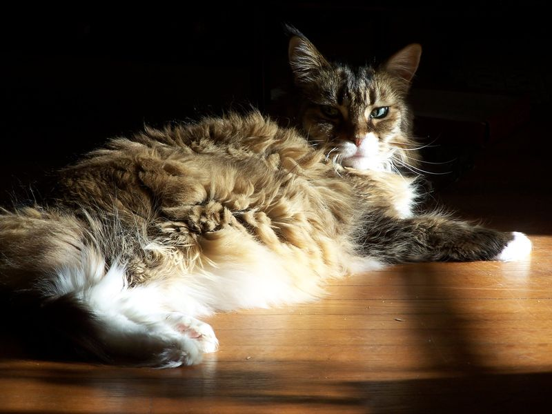 Senior kitty1