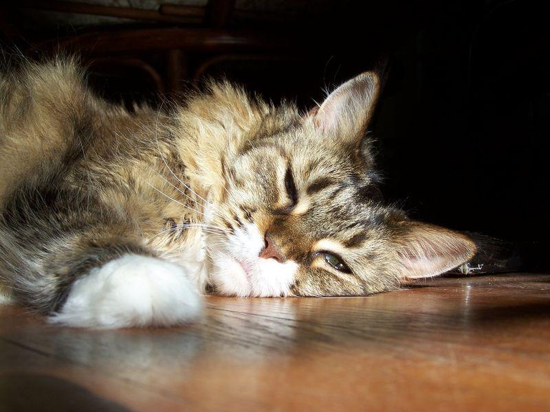 Senior kitty3