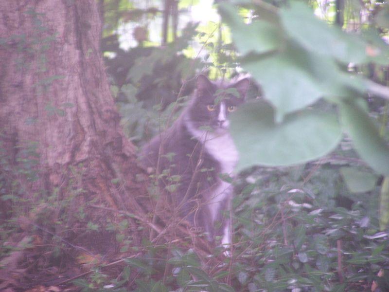 New cat 2