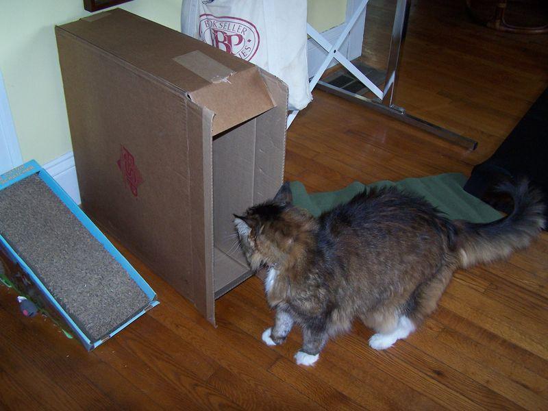 The box3