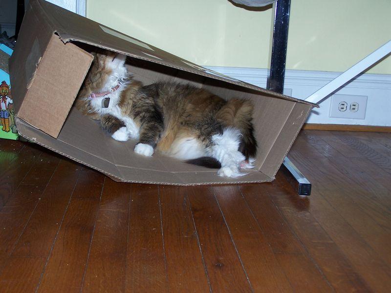 The box2
