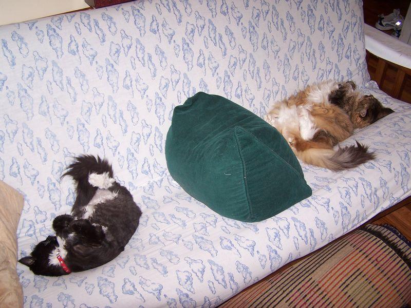 Both sleep cotc