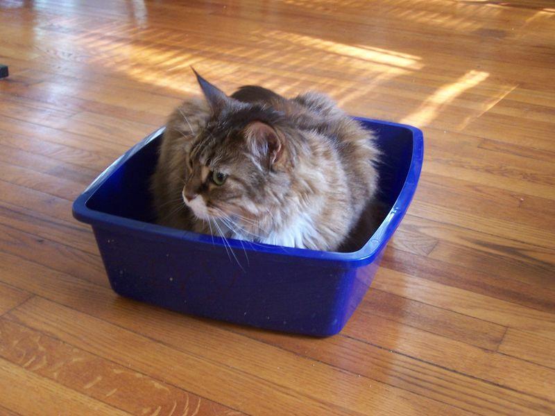 Maddie in ivy's box
