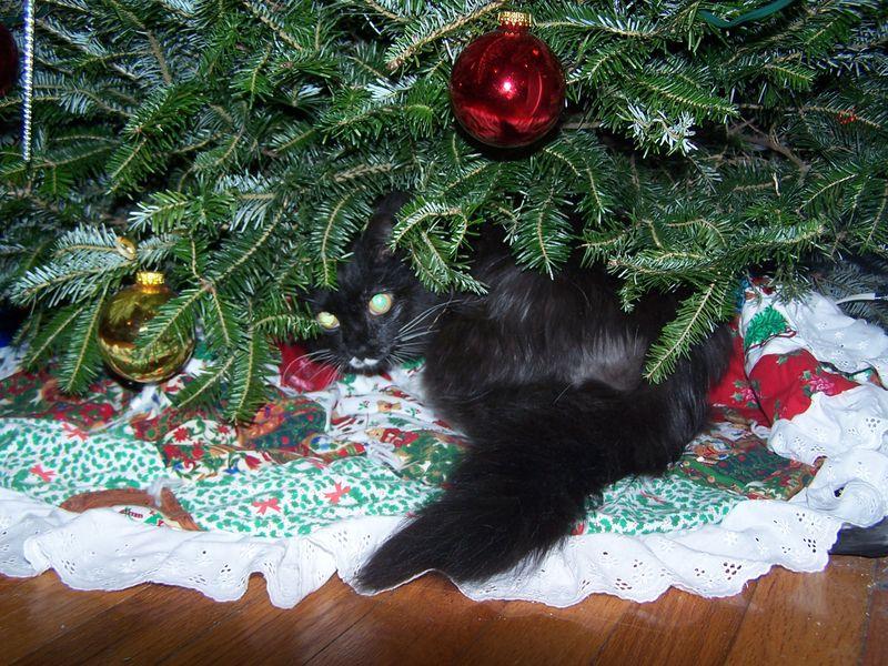 Ivy under tree2