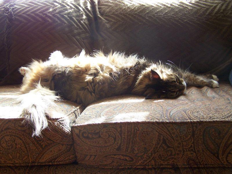 Sunlight nap3