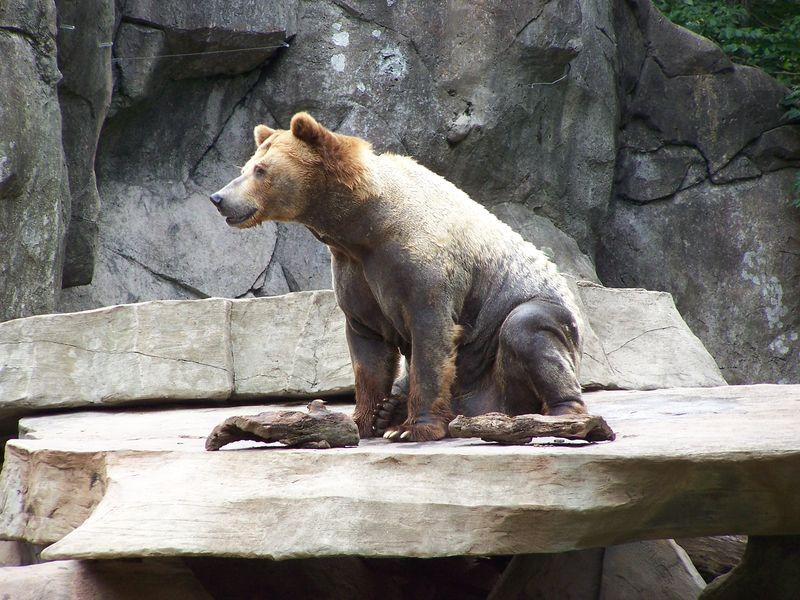 Misc 7-14 zoo 035