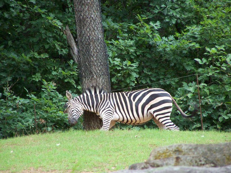 Misc 7-14 zoo 069