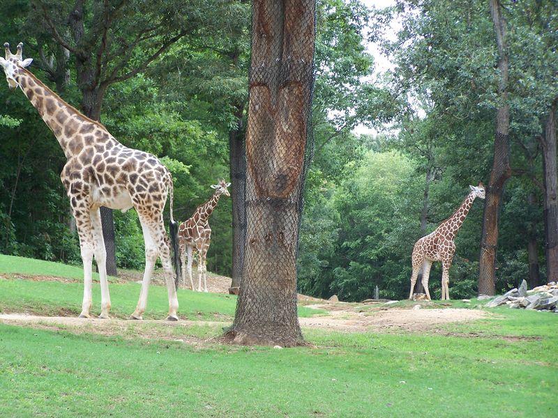 Misc 7-14 zoo 065