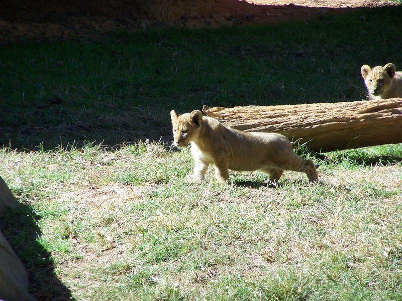 Misc 10-14 school zoo trip 042