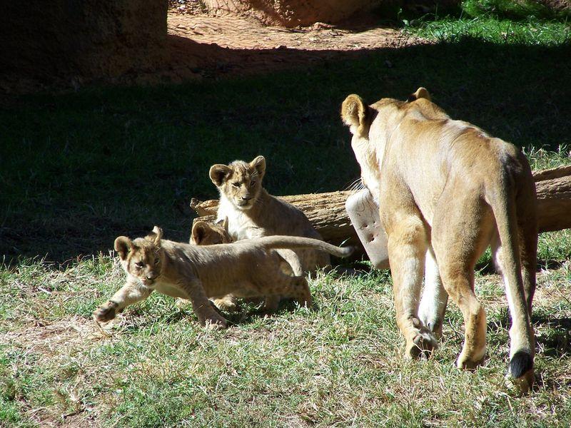 Misc 10-14 school zoo trip 045