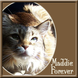 Maddie, Forever