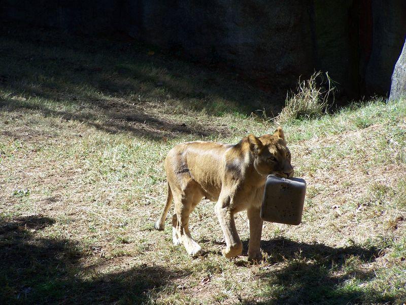 Misc 10-14 school zoo trip 043