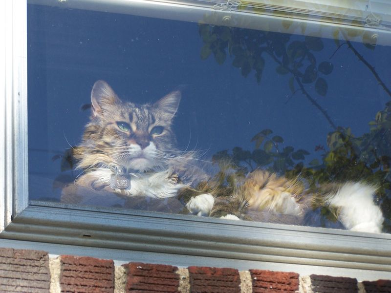 Cat in window2