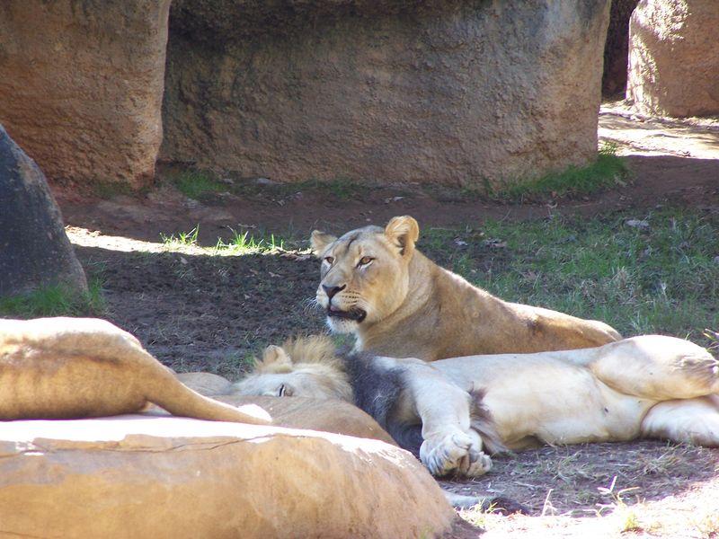 Zoo trip 2015 024