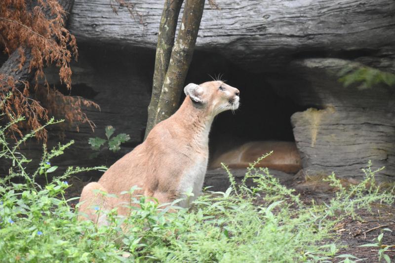Misc 8-19 zoo 002