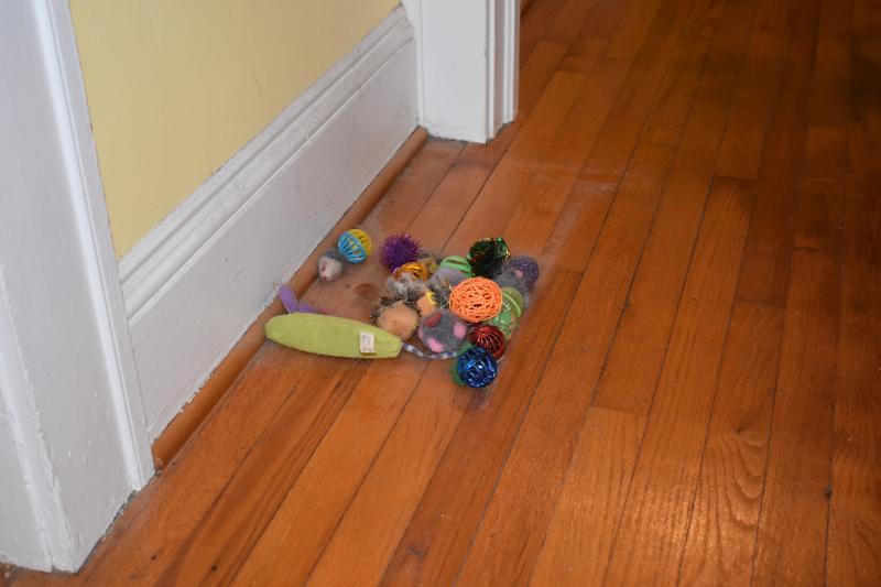 Misc 12-19 floor drop and cat toys 007