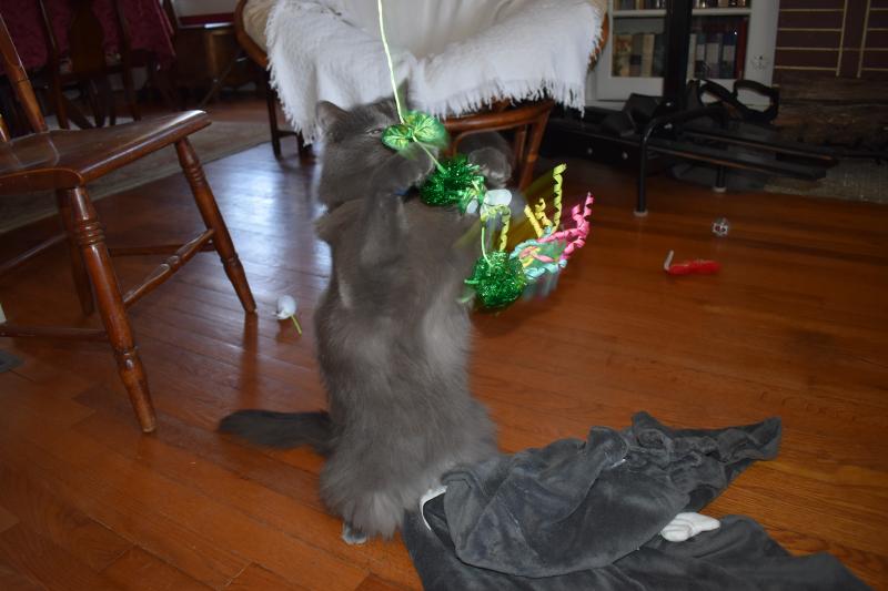 Misc 12-19 Daisy Christmas 058