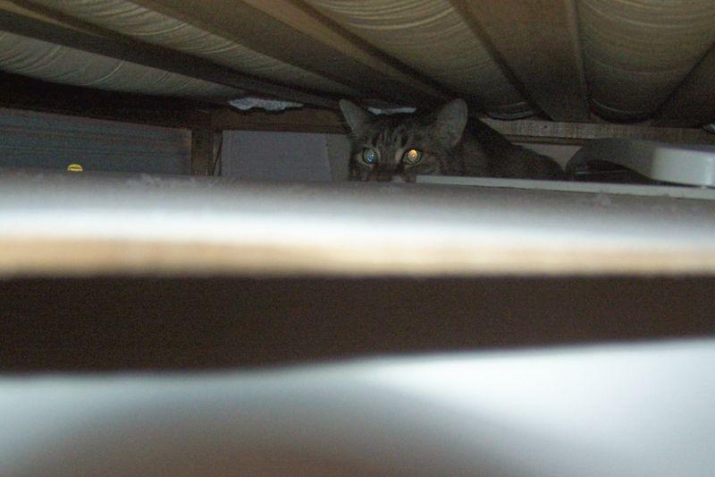 Hiding under bed