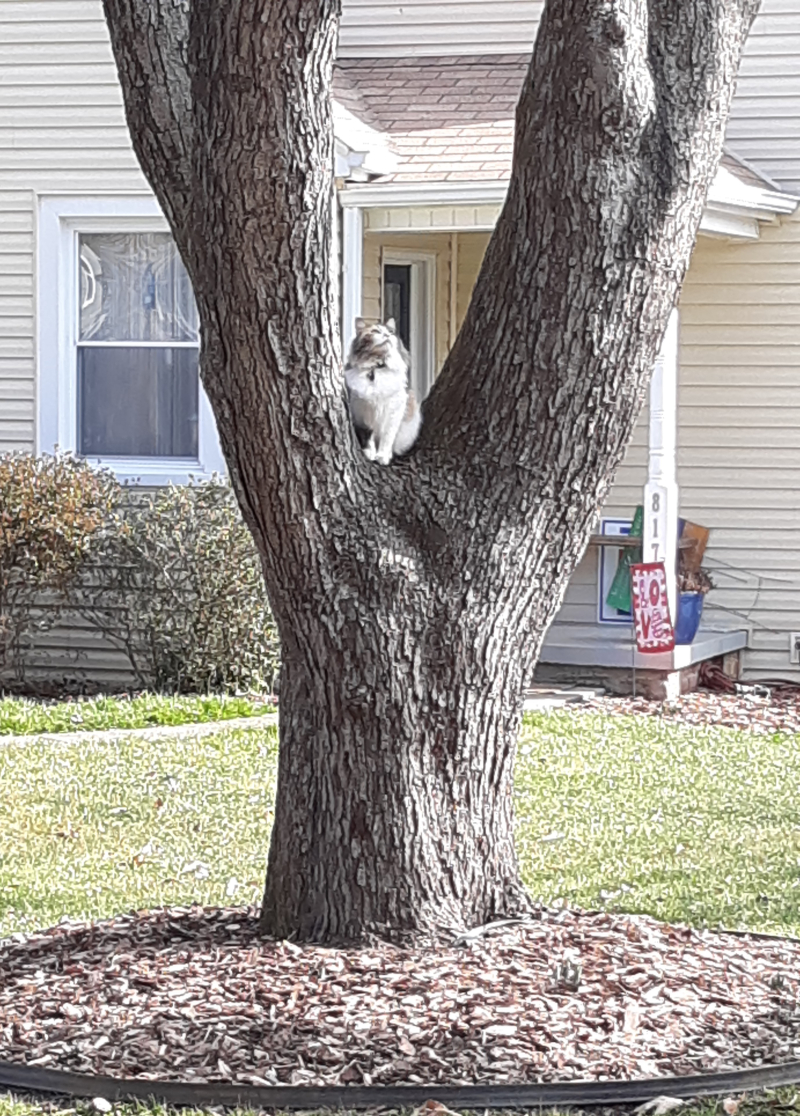 Cat crop blog ready 2