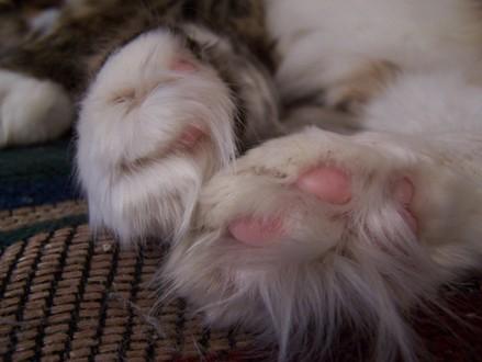 Furry_feet
