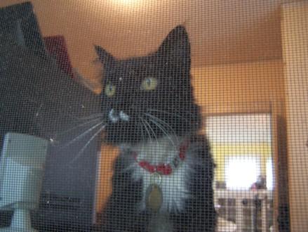 Ivy_in_window