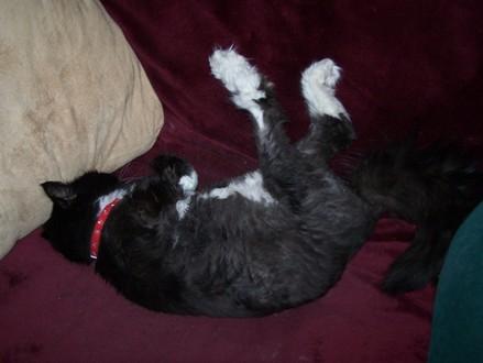 Ivy_cute_legs_nap1