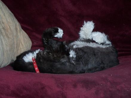 Ivy_cute_legs_nap2
