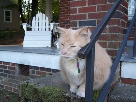 Guestcat_004