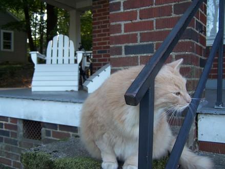 Guestcat_005