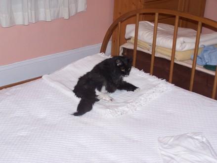 Bedbattle1